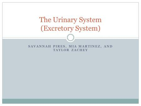 SAVANNAH PIRES, MIA MARTINEZ, AND TAYLOR ZACHEY The Urinary System (Excretory System)