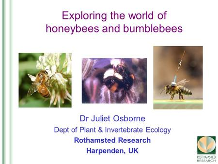 Exploring the world of honeybees and bumblebees Dr Juliet Osborne Dept of Plant & Invertebrate Ecology Rothamsted Research Harpenden, UK.