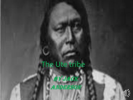The Ute tribe By jack anderson Table of contents Slide one cover Slide two table of contents Slide three tribe traditions Slide four what did they eat.