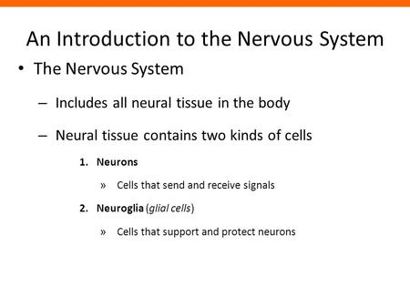 An Introduction to the Nervous System The Nervous System – Includes all neural tissue in the body – Neural tissue contains two kinds of cells 1.Neurons.