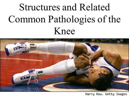 Structures and Related Common Pathologies of the Knee