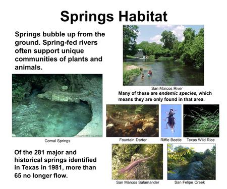 Springs Habitat Springs bubble up from the ground. Spring-fed rivers often support unique communities of plants and animals. Many of these are endemic.