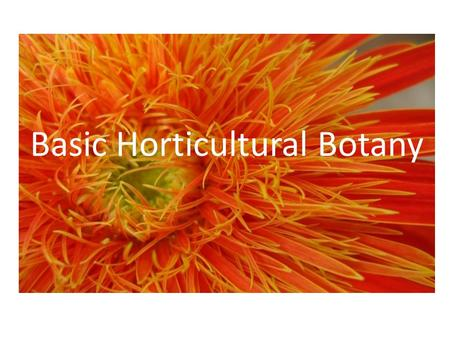 Basic Horticultural Botany. What is Horticulture? Horticulture is the art and science of growing vegetable, fruit, medicinal and ornamental plants Agronomy.
