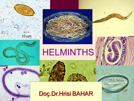 HELMINTHS Doç.Dr.Hrisi BAHAR. HELMINTHS ● The helminths are worm-like parasites. ● Helminths are separated according to their general external shape and.