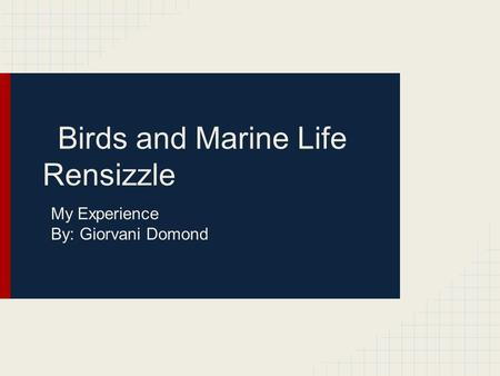 Birds and Marine Life Rensizzle My Experience By: Giorvani Domond.