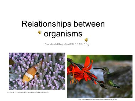 Relationships between organisms Standard 4 Key Idea 6 PI 6.1 MU 6.1g