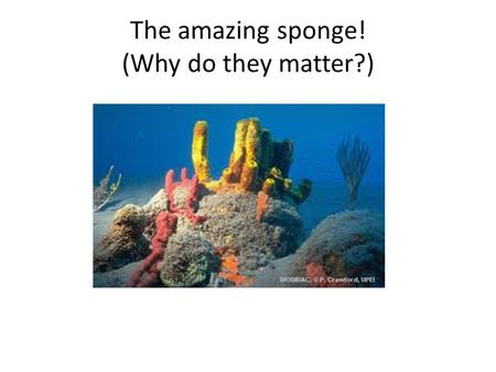 The amazing sponge! (Why do they matter?)
