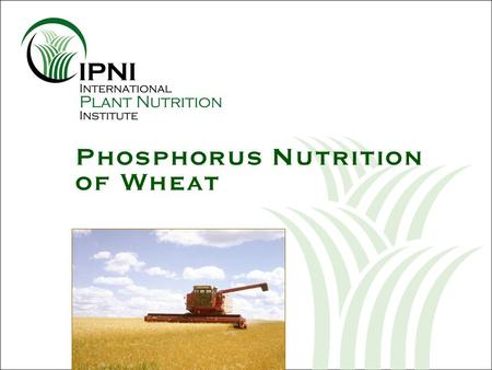 Phosphorus Nutrition of Wheat. Outline: P Nutrition of Wheat 1.What are the nutrient requirements of wheat throughout the season? 2.Why is P needed early.