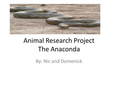 Animal Research Project The Anaconda By: Nic and Domenick.