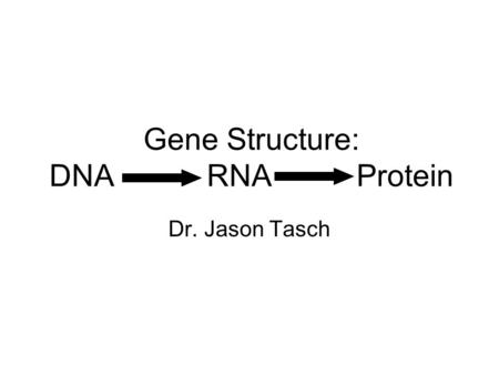Gene Structure: DNA RNA Protein Dr. Jason Tasch. Nucleic Acids Sequence of Nucleotides Nucleotide composed of: –Nitrogenous Base Purine Pyrimidine –Sugar.