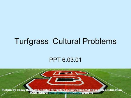 Turfgrass Cultural Problems PPT 6.03.01 Picture by Casey Reynolds, Center for Turfgrass Environmental Research & Education (CENTERE's) www.turffiles.ncsu.edu.