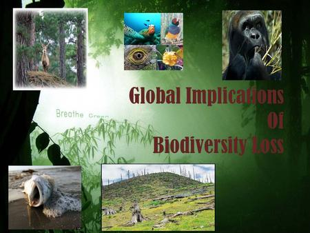 Global Implications Of Biodiversity Loss. INTRODUCTION BIODIVERSITY is the degree of variation of life forms within a given species, ecosystem, biome,