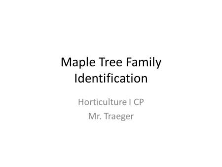Maple Tree Family Identification Horticulture I CP Mr. Traeger.