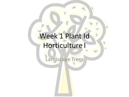 Week 1 Plant Id Horticulture I Landscape Trees Acer Palmatum Common Name: Japanese Maple Family: Araceae Native: Japan.