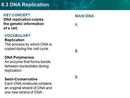 KEY CONCEPT  DNA replication copies the genetic information of a cell.