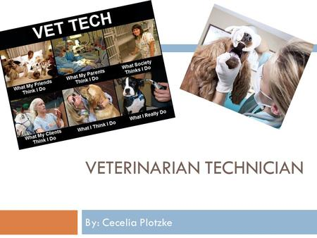 VETERINARIAN TECHNICIAN By: Cecelia Plotzke. Vet Tech Description & Duties  For many individuals, the ability to obtain high quality and modern vet care.