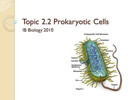 Topic 2.2 Prokaryotic Cells IB Biology 2010. Objectives 2.2.1 -Draw and Label a diagram of the ultrastructure of Escherichia coli as an example of a prokaryote.