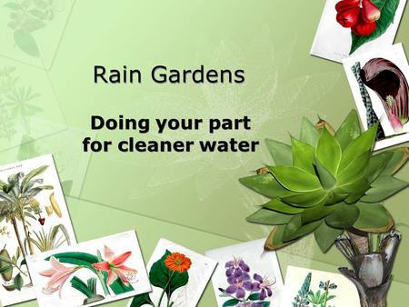 Rain Gardens Doing your part for cleaner water. What happens after the rainwater leaves your property?