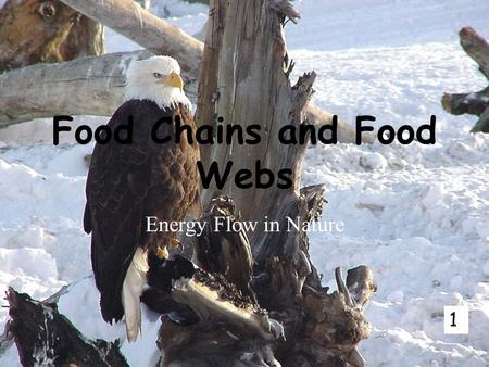 Food Chains and Food Webs Energy Flow in Nature 1.