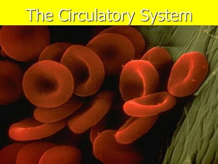 The Circulatory System. To survive what do cells need? Food and Oxygen A single celled animal like the amoeba, gets its food and oxygen by allowing materials.