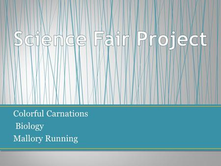 Science Fair Project Colorful Carnations Biology Mallory Running.