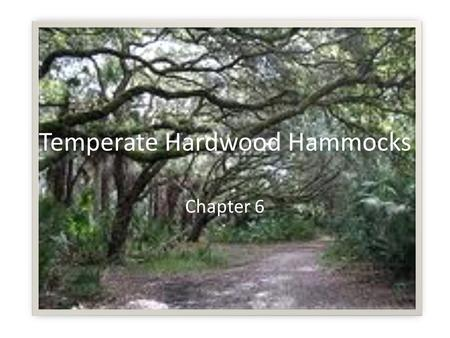 Temperate Hardwood Hammocks Chapter 6. Hardwoods Hardwoods – broad-leafed flowering trees, usually deciduous Softwoods – cone-bearing trees; have needles,