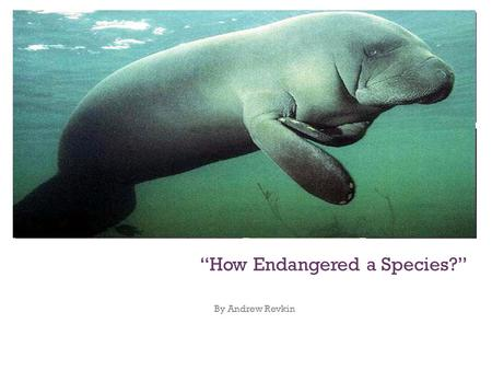"+ ""How Endangered a Species?"" By Andrew Revkin. + Today there are very few manatees left on our planet and they are considered to be an endangered species."