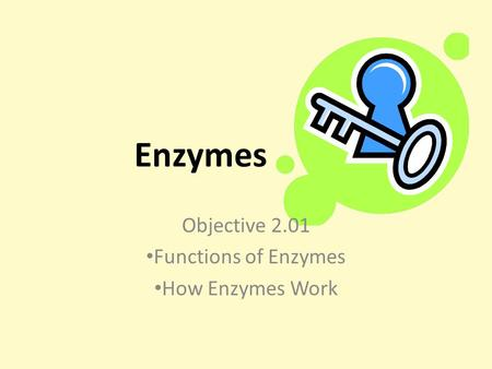 Enzymes Objective 2.01 Functions of Enzymes How Enzymes Work.