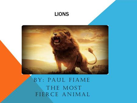 LIONS BY: PAUL FIAME THE MOST FIERCE ANIMAL. FACTS Lions are the only cats who live in groups which are called prides Prides have up to three males and.