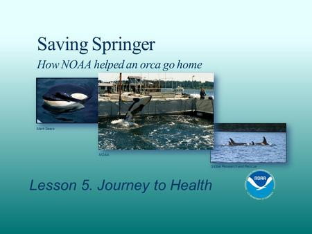 Saving Springer How NOAA helped an orca go home Lesson 5. Journey to Health NOAA Mark Sears Global Research and Rescue.