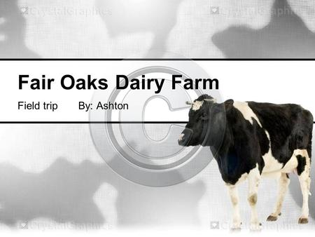 Fair Oaks Dairy Farm Field trip By: Ashton. Where does milk come from? Milk is produced by dairy cows.