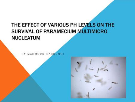 The Effect of Various pH levels on the Survival of Paramecium multimicro nucleatum By Mahmood Saboungi.