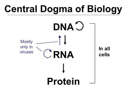 ap biology genetics essay questions