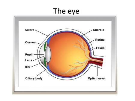The eye. A sensory organ that facilitates sight It allows light that passed over objects to enter in specific quantities into it As the light enters the.