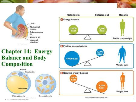© 2010 Pearson Education, Inc. Chapter 14: Energy Balance and Body Composition.
