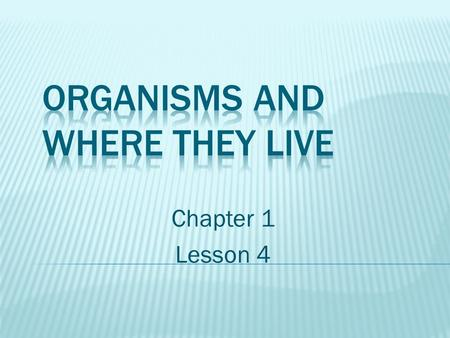 Chapter 1 Lesson 4. Students will:  Explore how all the living and nonliving parts of an environment interact.  Describe how the living organisms interact.