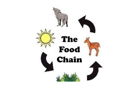 The Food Chain. What is a Food Chain? The food chain is the transfer of energy from one species to another. All living things need energy to grow.