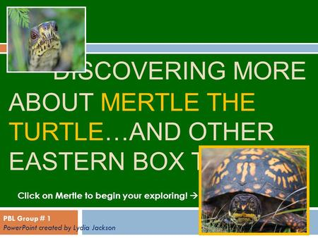 DISCOVERING MORE ABOUT MERTLE THE TURTLE…AND OTHER EASTERN BOX TURTLES! Click on Mertle to begin your exploring!  PBL Group # 1 PowerPoint created by.