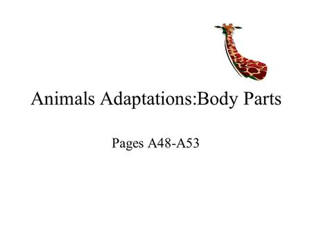 Animals Adaptations:Body Parts Pages A48-A53. adaptation a body part or a behavior that helps an animal meet basic needs All animals have adaptations.