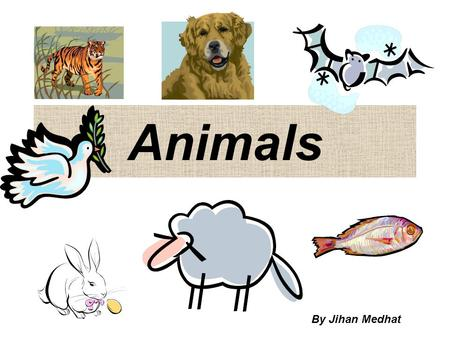 Animals By Jihan Medhat.