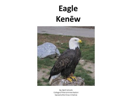 Eagle Kenēw By: Beth Schultz College of Menominee Nation Sacred Little Ones Initiative.