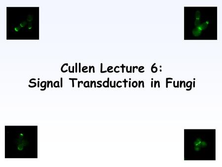 Cullen Lecture 6: Signal Transduction in Fungi. Filamentous Growth Saccharomyces cerevisiae (G. Fink) And fungal pathogens.