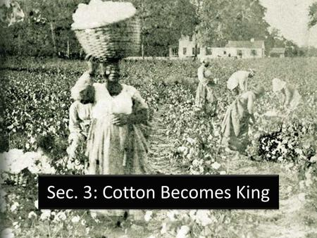 Sec. 3: Cotton Becomes King