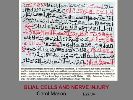 GLIAL CELLS AND NERVE INJURY Carol Mason 1/27/04.