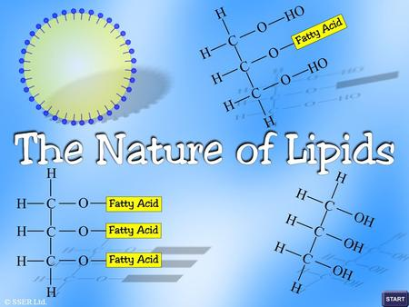 © SSER Ltd.. Lipids are a diverse collection of substances that have a range of different functions in living systems Lipids are compounds that serve.