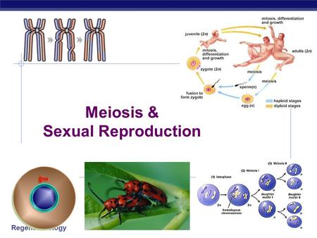 Regents Biology 2006-2007 Meiosis & Sexual Reproduction.