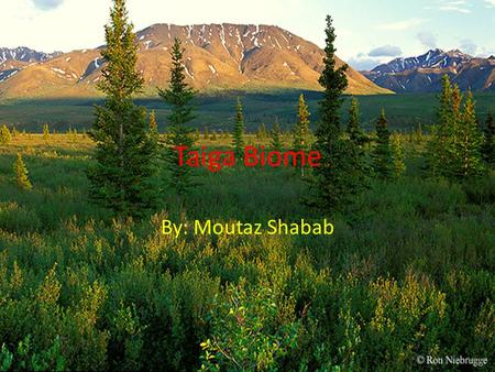 Taiga Biome By: Moutaz Shabab. Where is the Taiga Located The taiga is the biggest biome in the world, located on the northern hemisphere of the world,