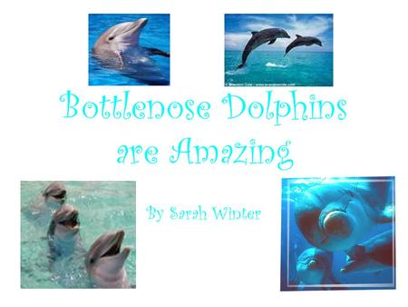 Bottlenose Dolphins are Amazing By Sarah Winter. Scientific Clarifications Classification: Kingdom Animalia Phylum Chordata Class Mammalia Order Cetacea.
