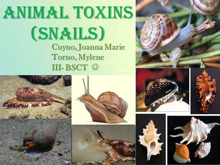 1 ANIMAL TOXINS (SNAILS) Cuyno, Joanna Marie Torno, Mylene III- BSCT Cuyno, Joanna Marie Torno, Mylene III- BSCT.