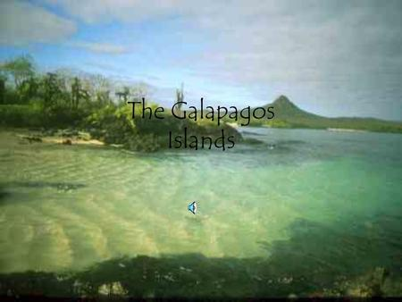 The Galapagos Islands. Location The Galapagos islands are located in the Caribbean.